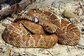 La Serpiente: Culto, Simbolismo y significado esotérico fuente espiritual
